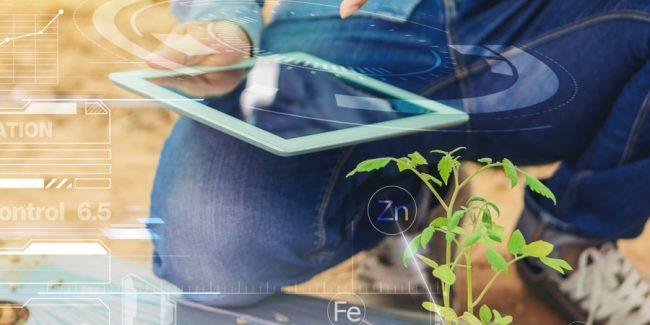 Ecology Versus Technology •